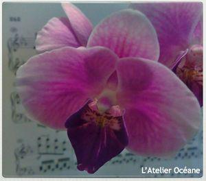 fleurs_et_partitions