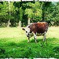 Cow parade !