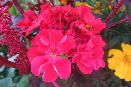 Fleurs Aout 2013 016