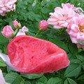 Sorbet fraise/framboise parfumé à la rose