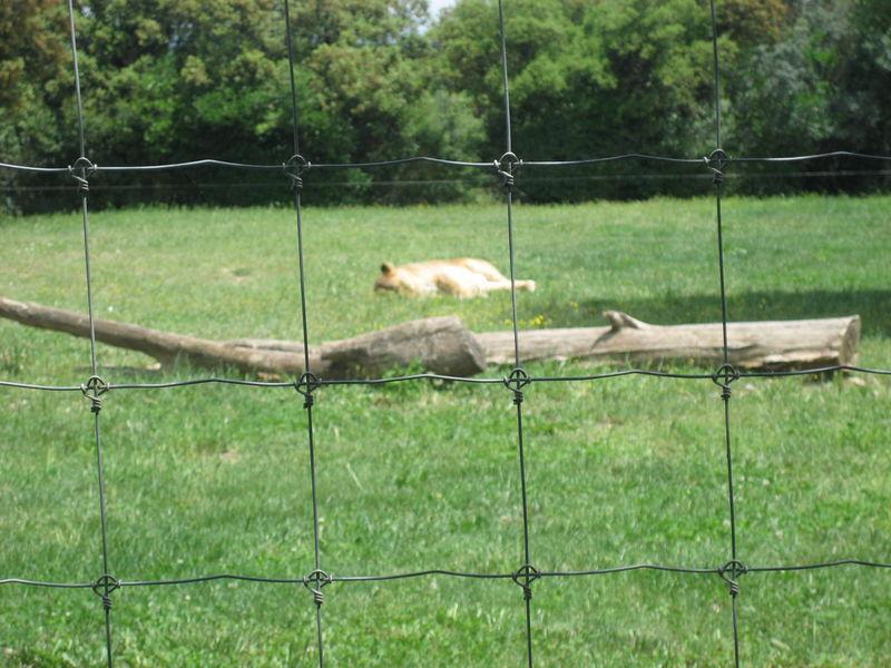 zoo 058