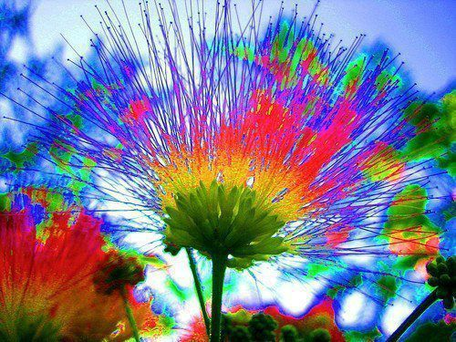 fleurs lumineuses_n