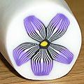 cane violettes 1