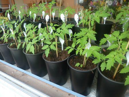 10-nursery 10 mars (4)