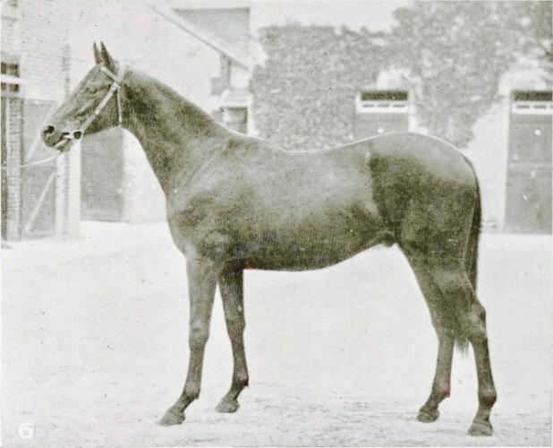 Cheval-Le Gueliz-Gorgos-Guilelma-Haras-Nonant-Le-pin-64000-fr-Martinez-de-Hoz-juillet-1922