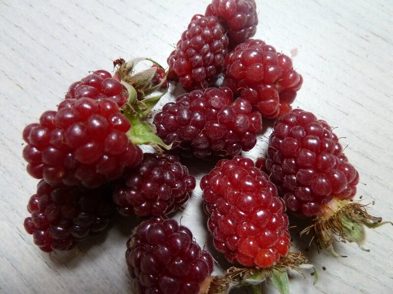 6-tayberry-