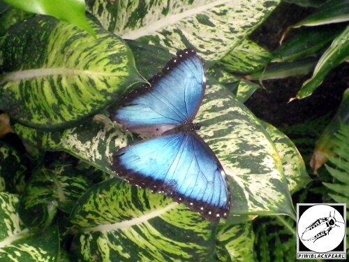 Jardin des papillons de Hunawihr