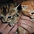 Petits chats à donner !