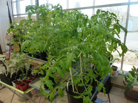 17-tomates (3)