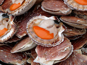 coquille_st_jacques
