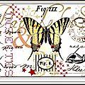 Image transfert papillon, pm ou gm