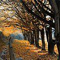 Lumière de fin d'automne