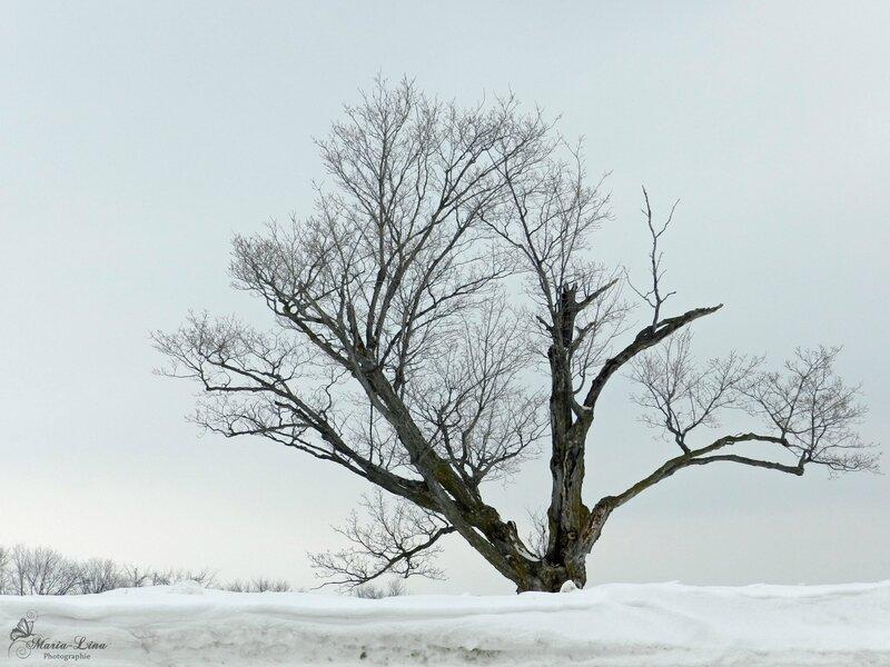 arbrehiver