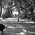01-12-Promenade