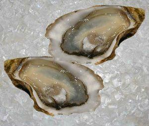 Gillardeau-Oyster-Fine-de-Claire-1