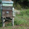 les apiculteurs de la baie de naples
