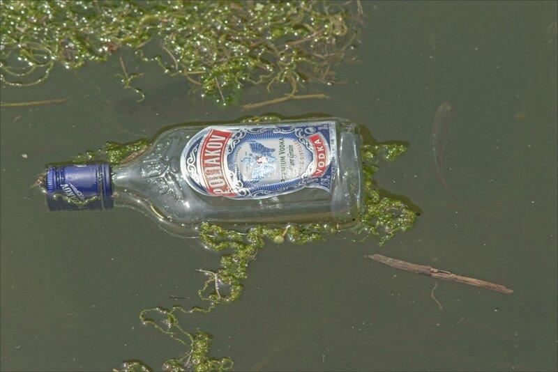 ville bouteille rivière poissons 080717 1