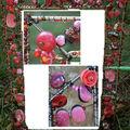 PICT2289 copie