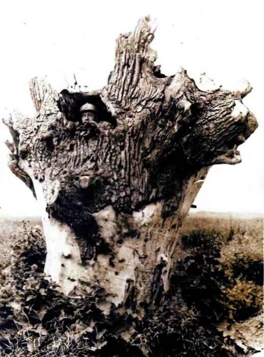 Faux arbres2