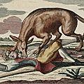 La bête du gévaudan (partie 6)