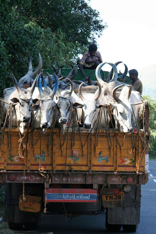Noël en Inde: le Kerala