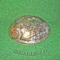 Nacre pawa ormeau 1