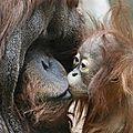 Ces animaux plus qu'humain!