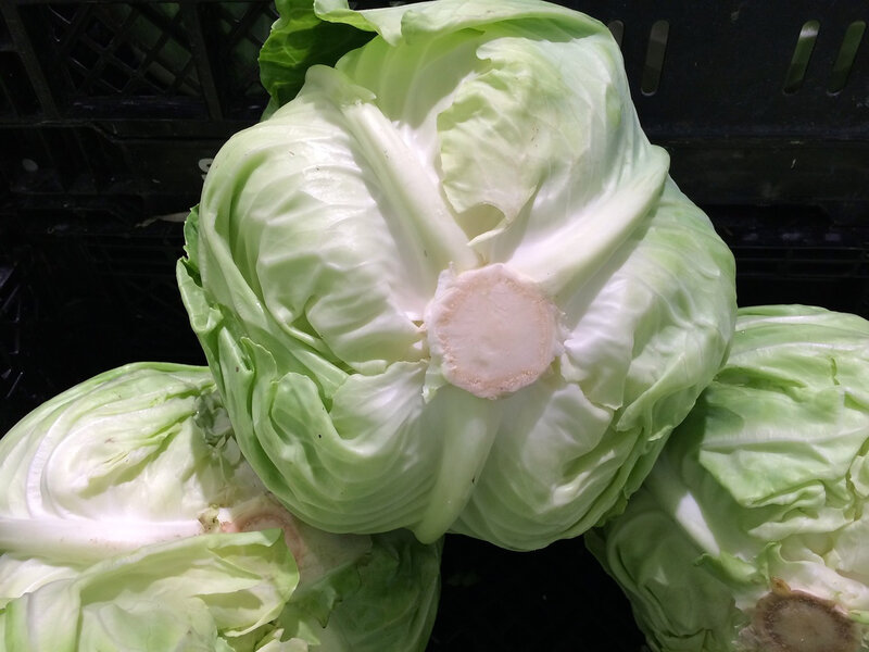 cabbage-1586316_1280