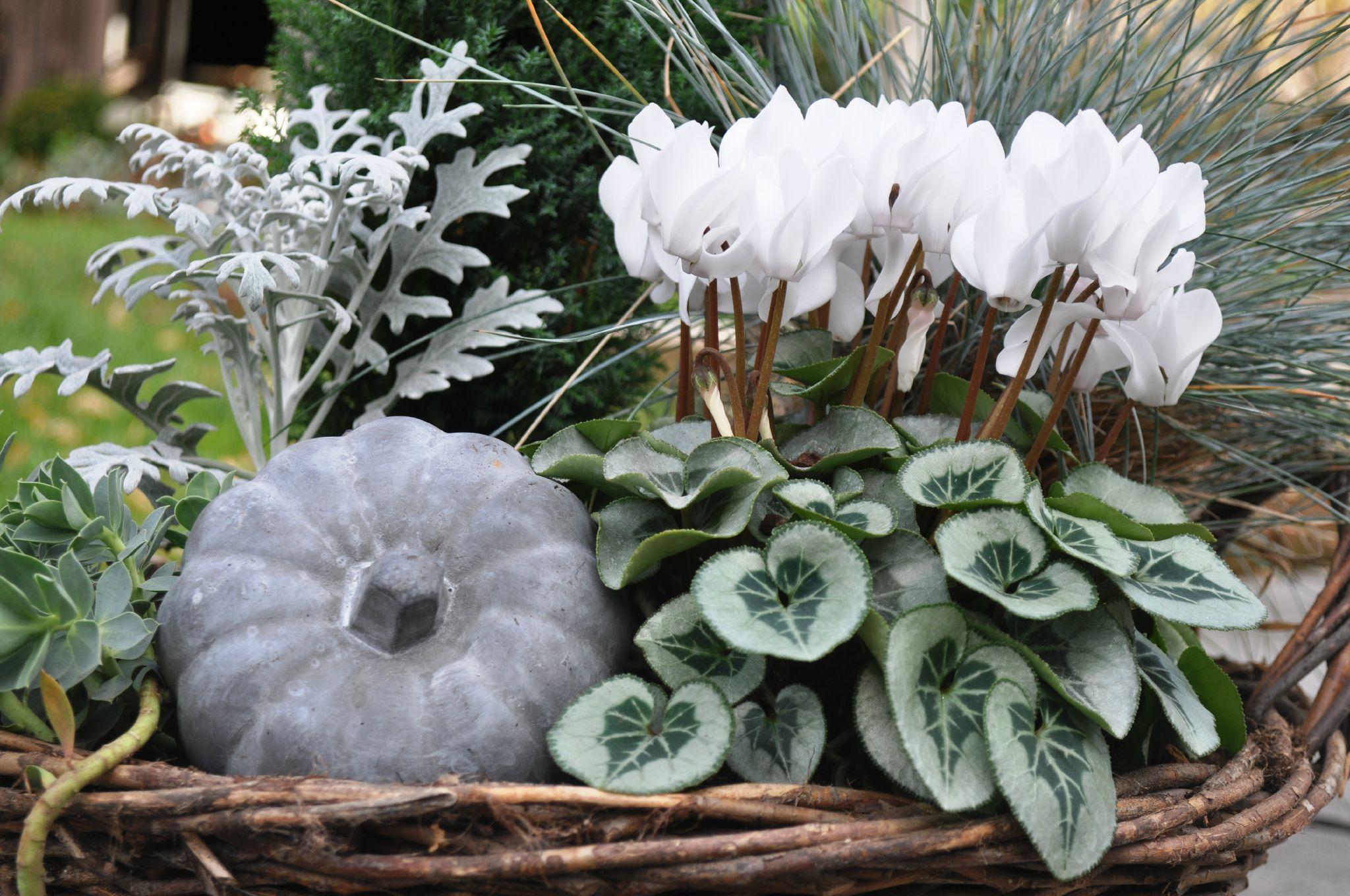Pot e blanche calli 39 canthus le jardin for Plante jardiniere hiver