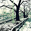 Tokyo in white again