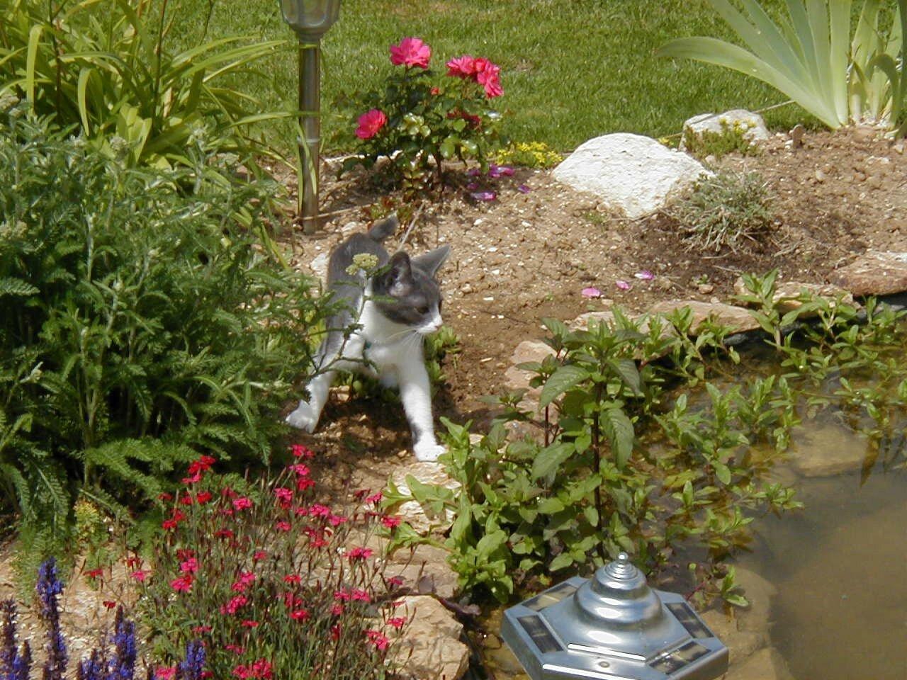 PIC00034 (09-06-2007)