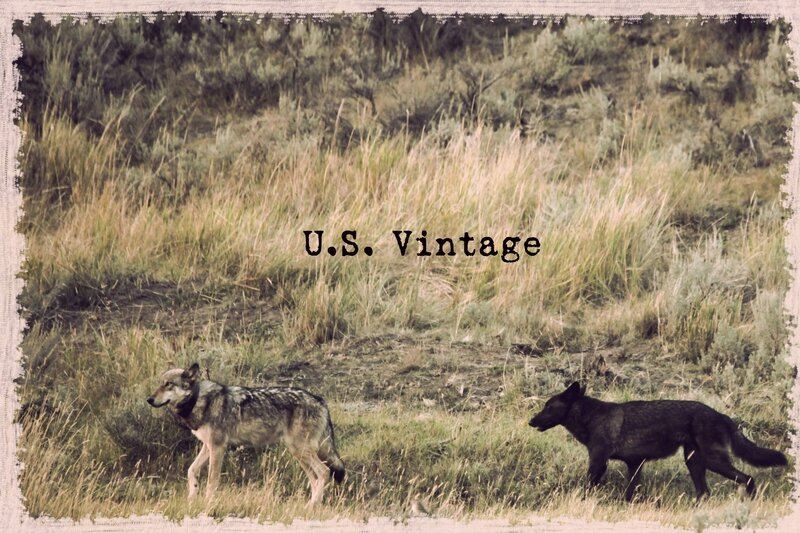 us vintage wolwes yellowstone