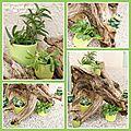 Arbre à plantes avec un bois flotté