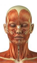 naturo rides muscles visage 2