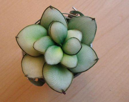 cactus_tissus_001