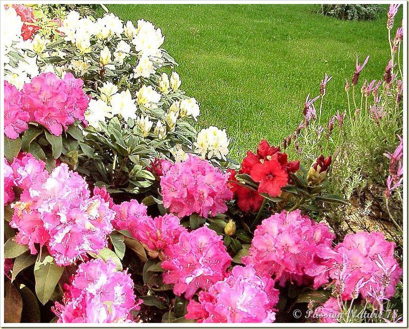 Le jardin de PassionNature78 (26)