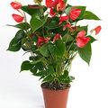Les plantes qui nous veulent du bien...