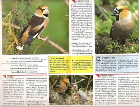 oiseau_grosbec