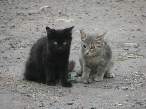 2008 09 11 Les deux chatons