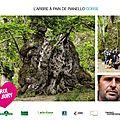 L'édition 2014 de l'arbre de l'année....