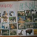 herbivore/carnivore