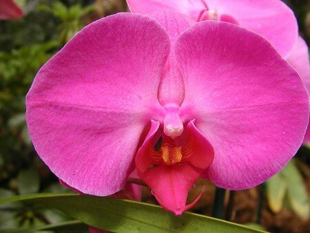 Macintosh_HD_Desktop_Folder_orchid_2_bg_032402