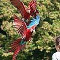 perroquets arrivant-0048