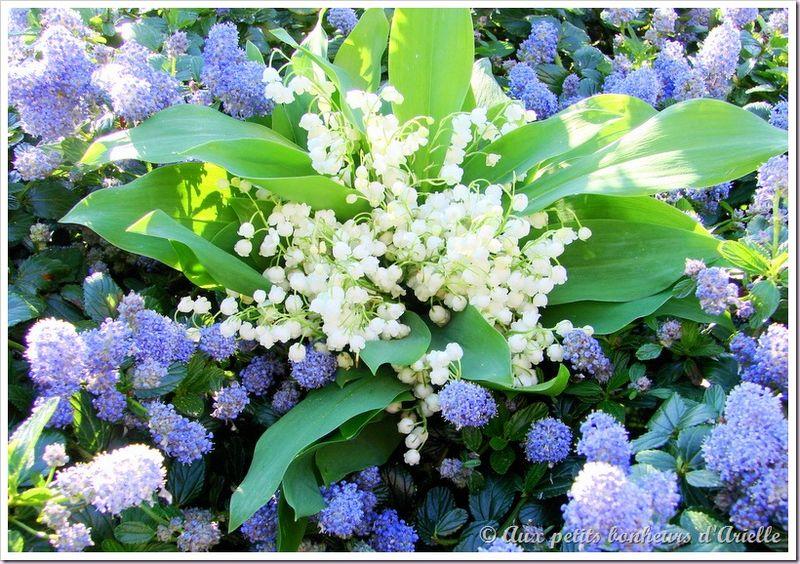 Bouquet de muguet de la forêt (3)