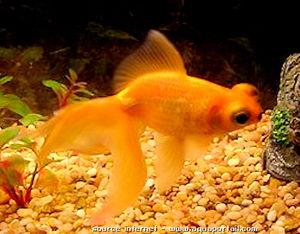 Encore une histoire de poissons a noisette city et de la lecture a venir le blog de noisette - Poisson rouge rigolo ...