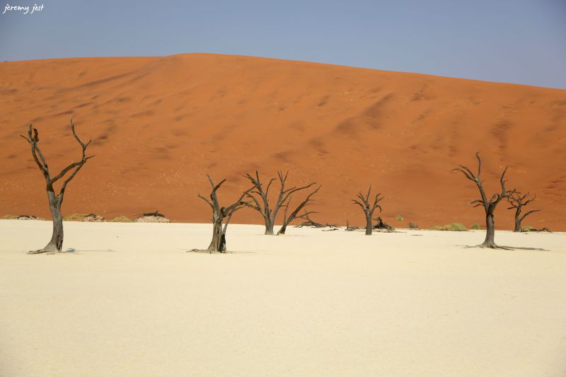 Trees and dunes dead vlei
