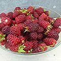 13 juin - petits fruits, le jus va couler...épépineuse à petits fruits ou à tomates....à chacun de décider...