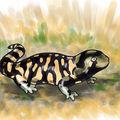 Salamandre tigrée