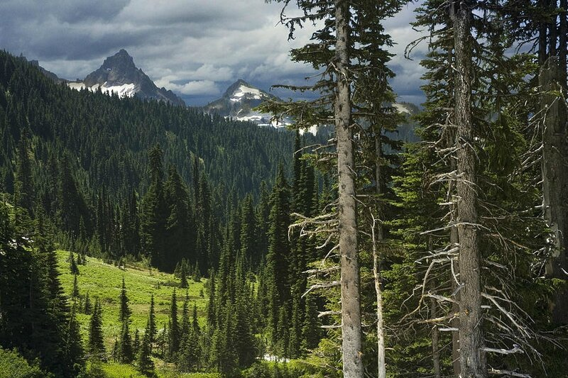 mountains-and-forest-in-british-columbia-randall-nyhof