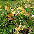 IMG_8951 - t